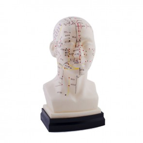 Acupuncture meridians head model bust
