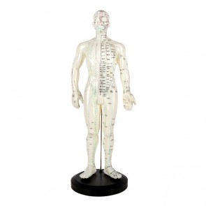 Full Body Model (50cm)